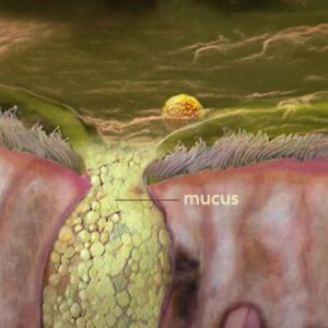 What is Mucus, and what benefits are associated with it?
